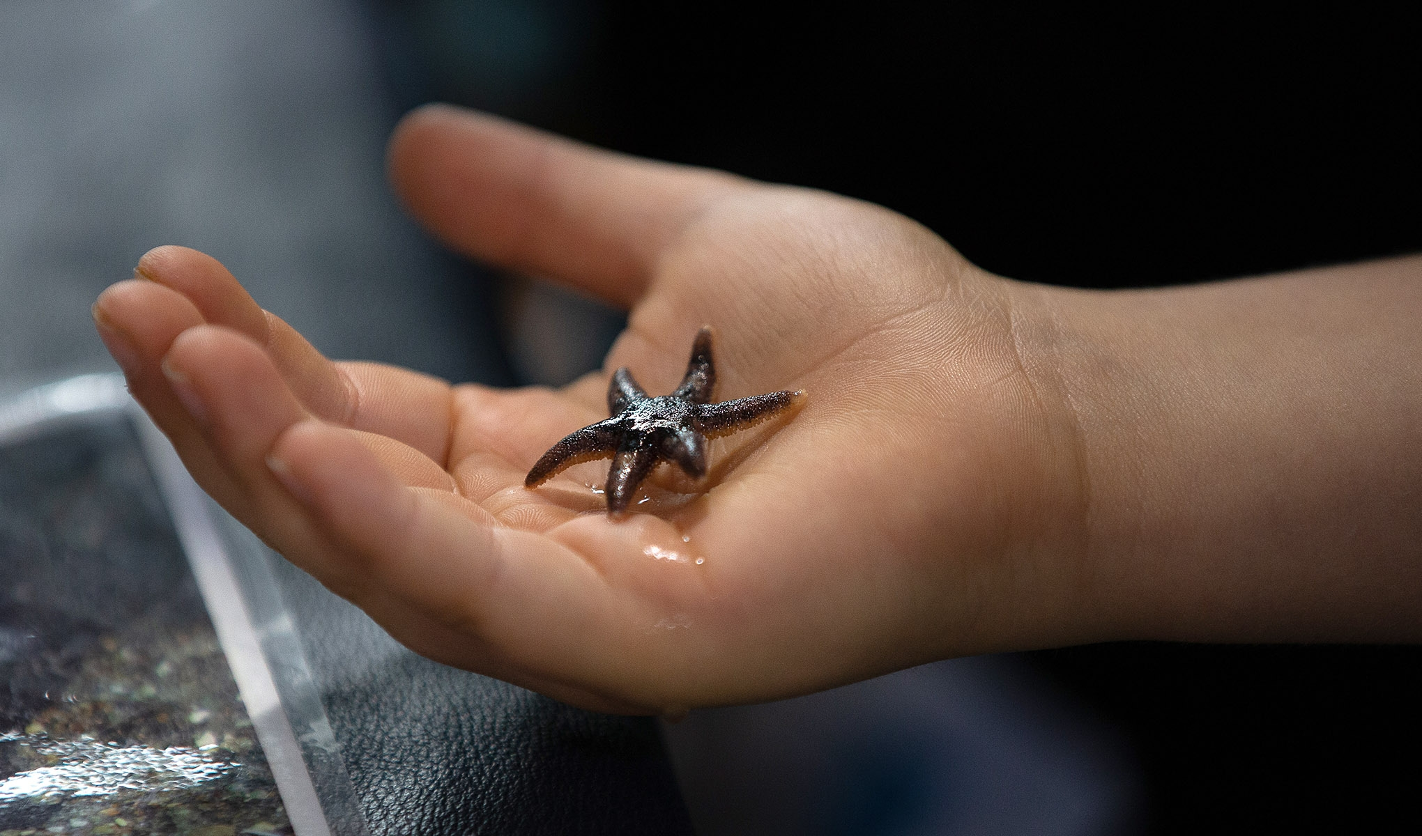Small sea star in the palm of a hand